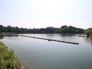鮎川湖へら画像
