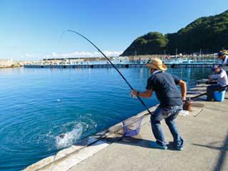 美浜町漁業協同組合 ひるが海上釣堀海上釣堀・桟橋画像