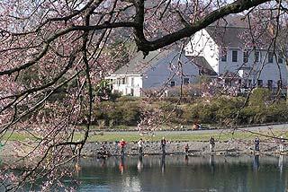 加賀フィッシングエリア桜と3号池写真