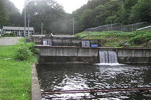 つりぼりカネト水産水量豊富写真