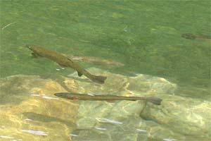 レイクウッドリゾート水はクリア写真