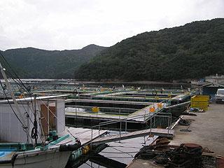 釣り堀マルヨ 海上釣堀・海釣公園画像