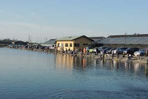 増井養魚場メインポンド写真
