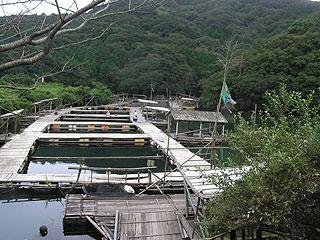 南島海釣りセンターわかさぎ画像