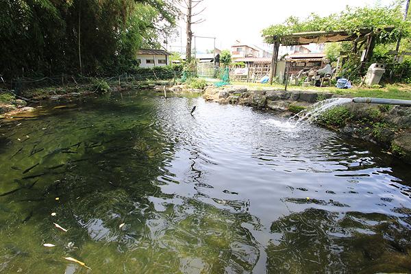恩方国際釣堀場ニジマス釣り池写真