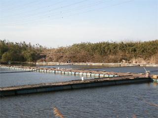 田島池へら画像