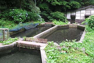 ようらく渓流釣り場ストック池写真
